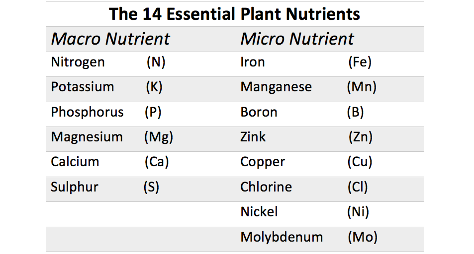 THE BUILDING BLOCKS IN THE PLANT |